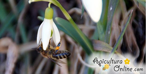 albina-ghiocel