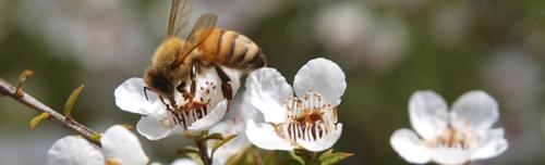 Albina pe floare Martie