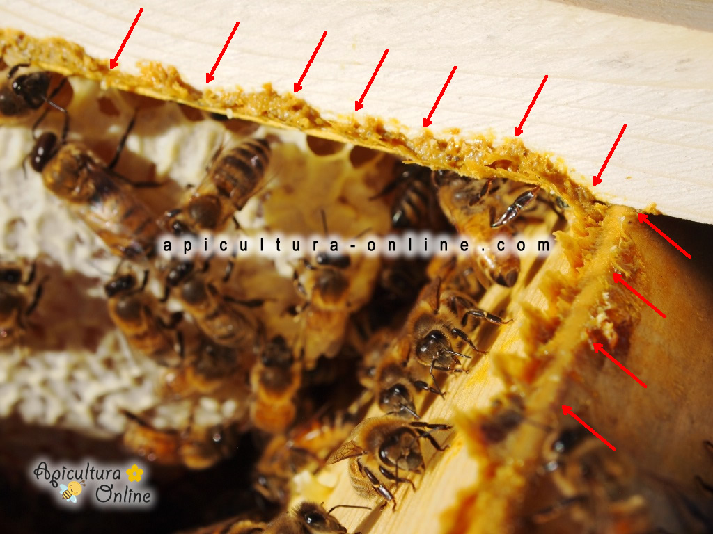 Propolis in stup
